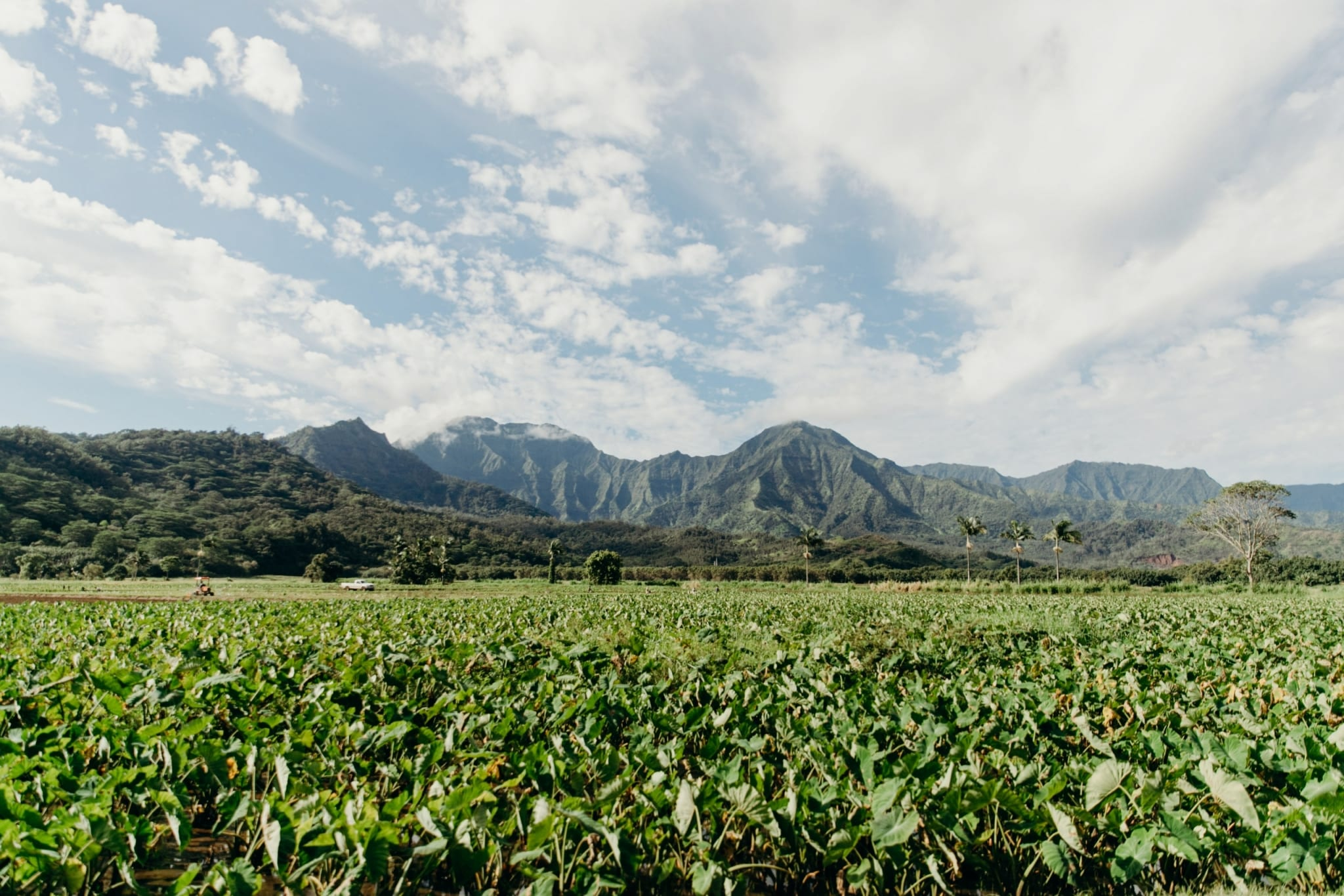 View of Taro Patch and Mountains